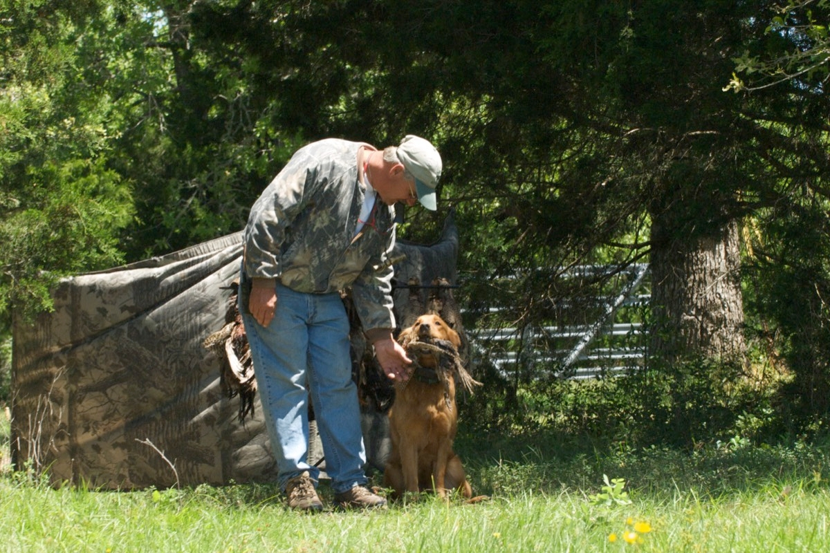 Training AKC Dogs in Texas
